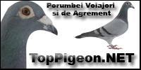 http://www.toppigeon.net